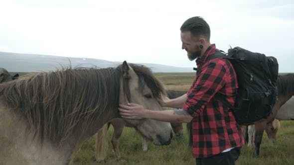 Thumbnail for Icelandic Horses Are a Hipster Guy Caressing a Horse in Iceland