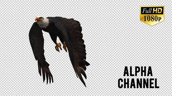 Thumbnail for Eagle 8