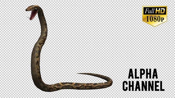Thumbnail for Python