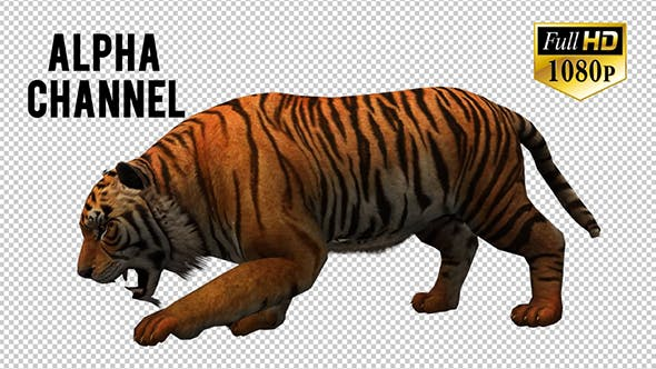 Thumbnail for Tiger