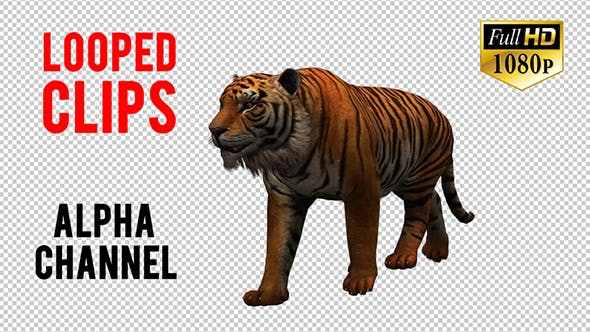 Thumbnail for Tiger 7