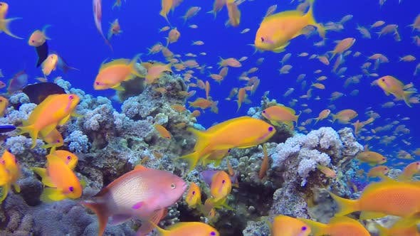 Thumbnail for Underwater Close Up Happy Tropical Fishes