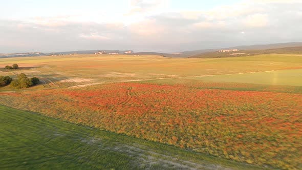 Thumbnail for Flight Over Field of Red Poppies at Sunset.
