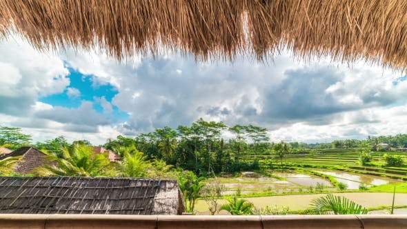 Cover Image for of Running Clouds Over Green Rice Fields in Ubud on the Island of Bali in Indonesia. View From the