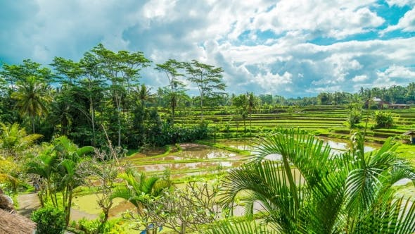 Cover Image for of Running Clouds Over Green Rice Fields in Ubud on the Island of Bali in Indonesia.