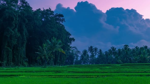 Cover Image for Clouds at Sunset  Over Large Tropical Trees and Rice Fields on the Island of Bali in Indonesia.