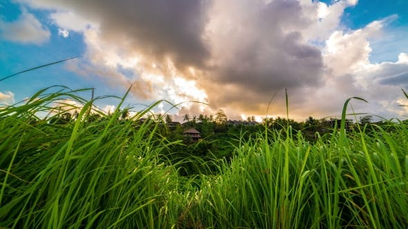 Cover Image for Fresh Dewy Green Grass at Sunset and Clouds  in Ubud on Bali Island in Indonesia.
