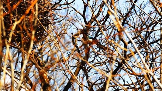 Thumbnail for Magpie Nest Renovation