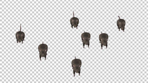 Thumbnail for Rats