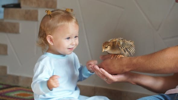 Thumbnail for Cute Little Girl Is Touching the Chicken