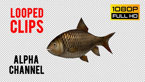 Thumbnail for Fish Looped