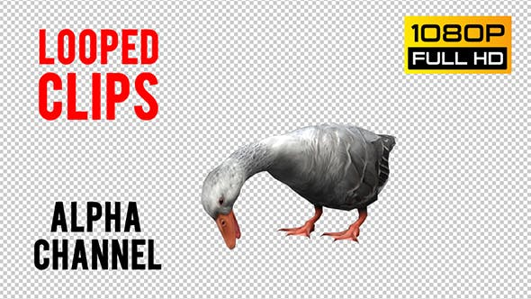 Thumbnail for Goose Looped 2