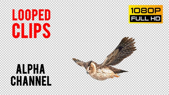 Thumbnail for Owl Looped 3
