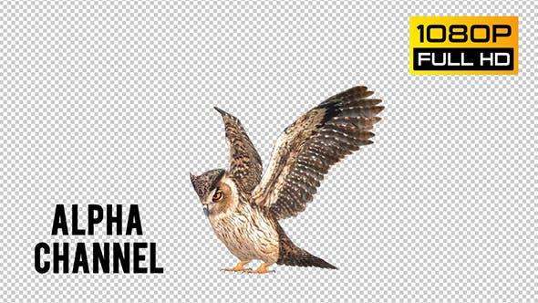 Thumbnail for Owl 5