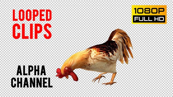 Thumbnail for Rooster Looped 2
