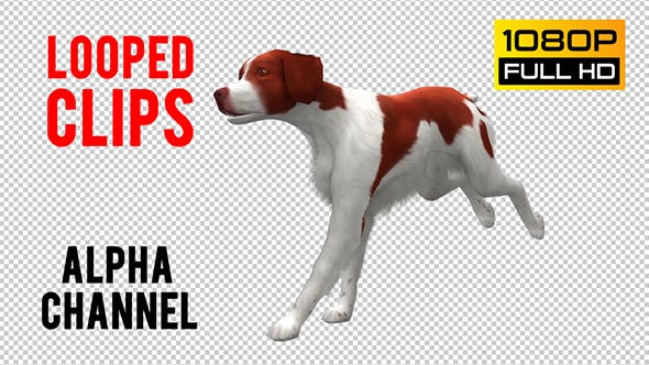 Thumbnail for Dog Looped 5