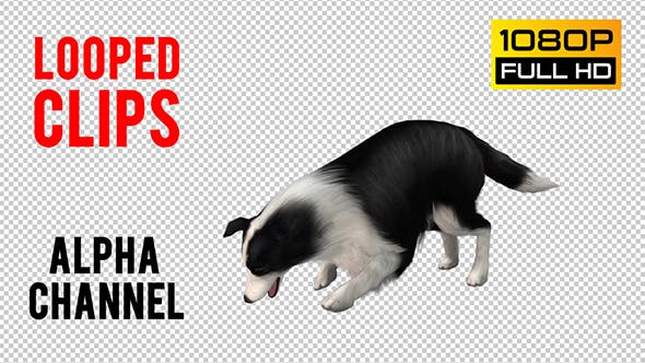 Thumbnail for Dog Looped 2