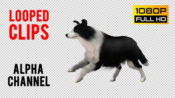 Thumbnail for Dog Looped 3
