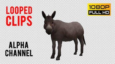 Donkey Looped