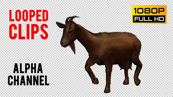 Thumbnail for Goat Looped 2