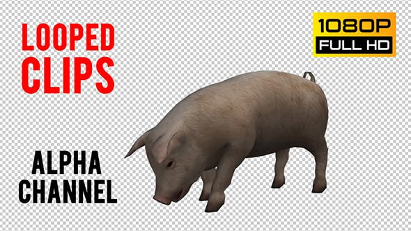 Thumbnail for Pig Looped 2