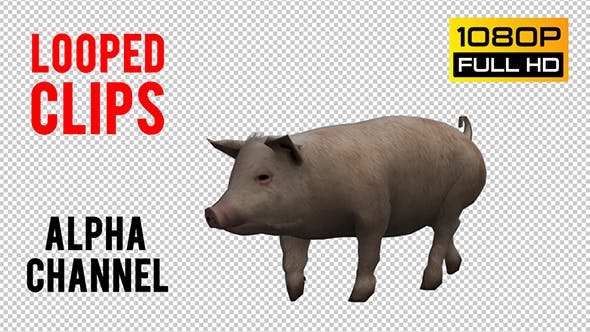 Thumbnail for Pig Looped 3