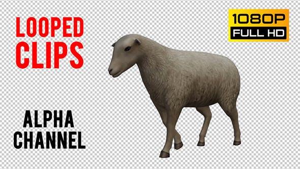 Thumbnail for Sheep Looped 2