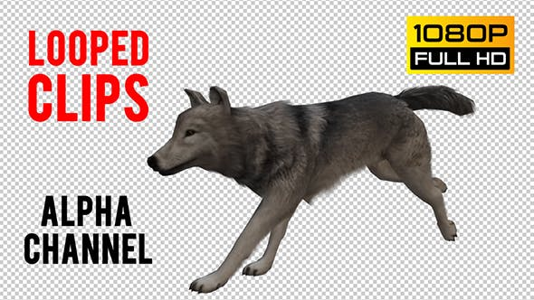 Wolf Looped 4