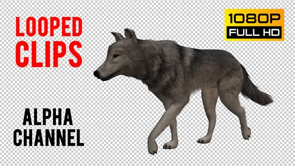 Thumbnail for Wolf Looped 6