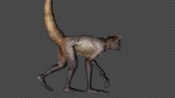 Monkey Walk Pack 4 In 1