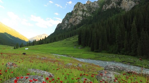 Thumbnail for Beautiful Mountain Landscape with Flowers and Mountain River