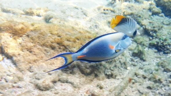 Thumbnail for Tropical Fish and Colorful Coral Reef Underwater
