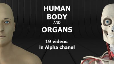 Human Body and Organs