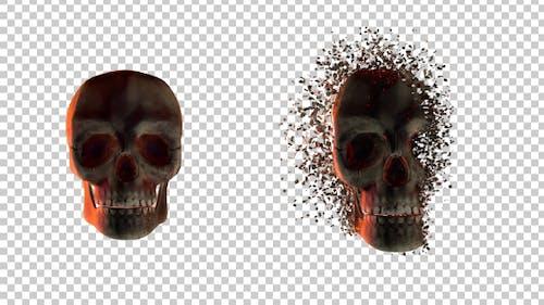 Skull Transforming