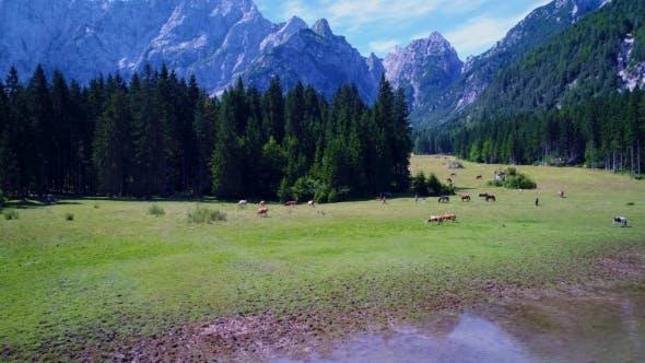 Thumbnail for Horses Graze on Green field.Lake Lago Di Fusine Superiore Italy Alps