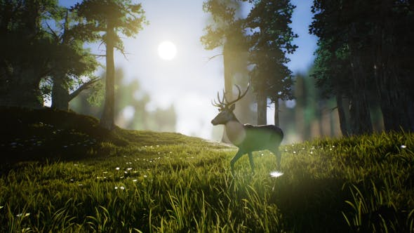 Thumbnail for Lonely Deer