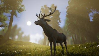 Lonely Deer 3