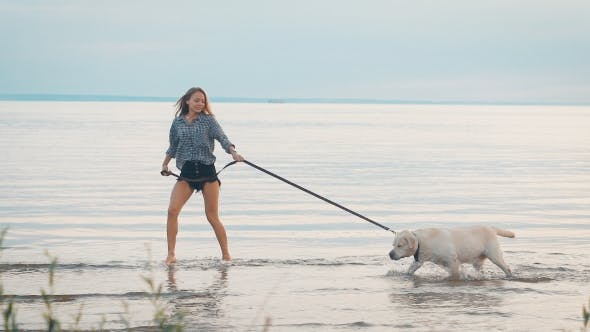 Thumbnail for Woman Is Walking Big Labrador on a Leash on a Shore of Large River in Evening Time
