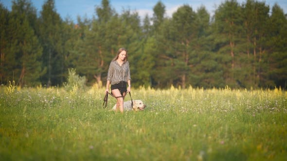 Thumbnail for White Labrador Is Walking on a Leash with Young Slim Owner Near Forest in Sunny Weather in Summer