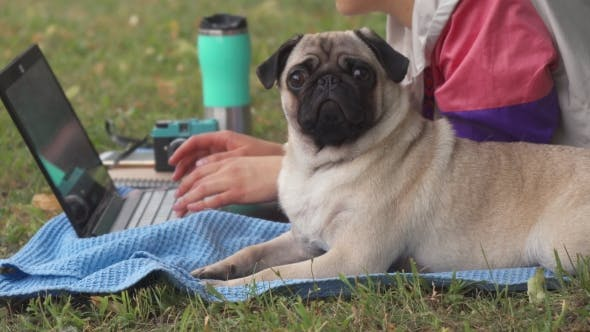 Thumbnail for Girl Laying and Typing on Laptop on a Lawn with Her Pug Around