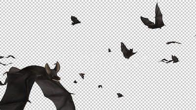 Bats - Swarm Flying Around - Loop