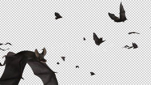 Thumbnail for Bats - Swarm Flying Around - Loop - 4K