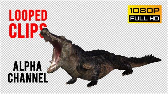 Thumbnail for Crocodile - Alligator Looped