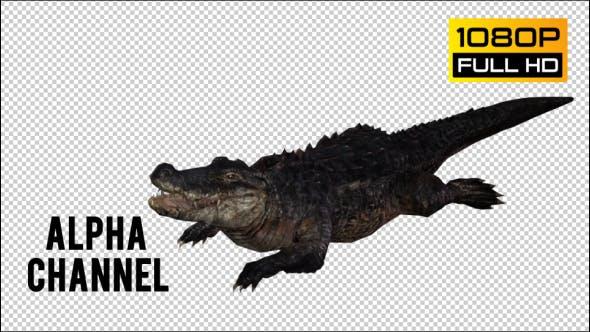 Thumbnail for Crocodile - Alligator 3