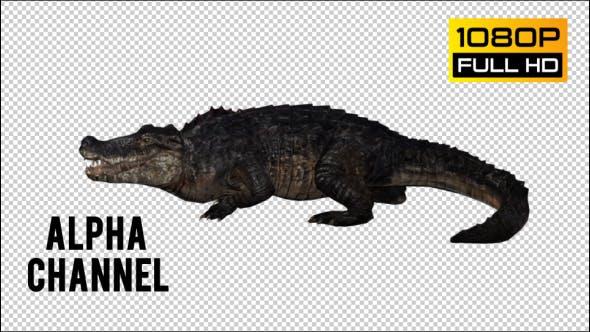 Thumbnail for Crocodile - Alligator 4