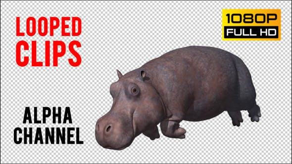 Thumbnail for Hippopotamus Looped
