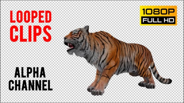 Thumbnail for Tiger Looped