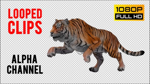 Thumbnail for Tiger Looped 4