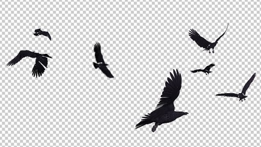 Thumbnail for Black Birds - Angry Flock - Flying Around - III - 4K