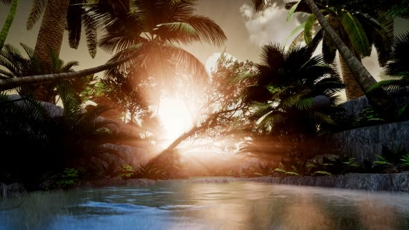 Thumbnail for Sunset Beams Through Palm Trees